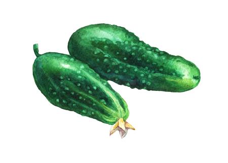 Sucumbers。白い背景の水彩画。