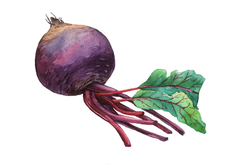 creativeness: Beet. watercolor painting on white background. Stock Photo