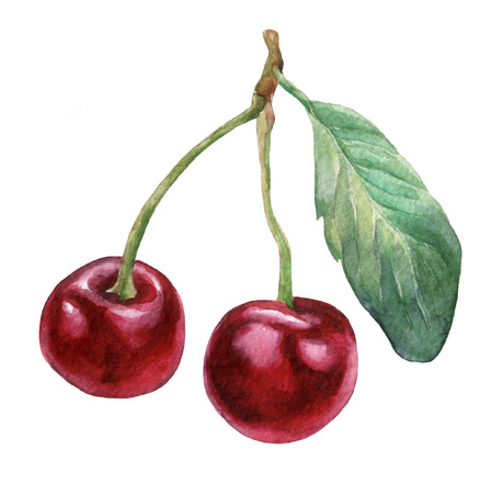 Cherries .  watercolor painting on white background. Stock Photo
