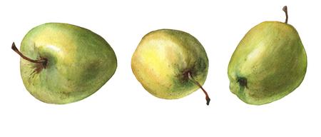 緑のリンゴ。白い背景の水彩画。 写真素材