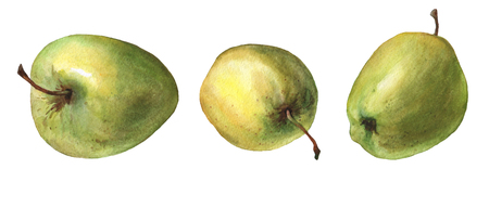 Green apples. watercolor painting on white background.