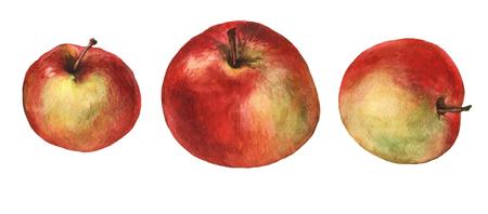 赤いリンゴ。 白い背景の水彩画。