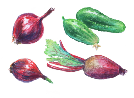 Vegetables . Pastel drawing on white background.