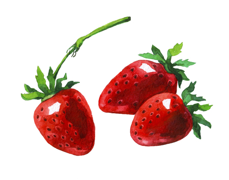 Strawberry.  watercolor painting on white background.
