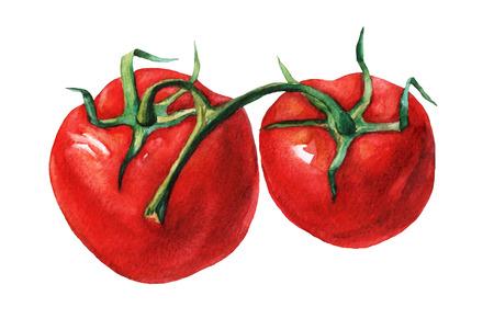 トマト。 白い背景の水彩画。