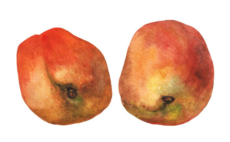 Peaches.  watercolor painting on white background.