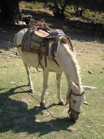 芝生の上をかすめる古いサドルと白い馬 写真素材