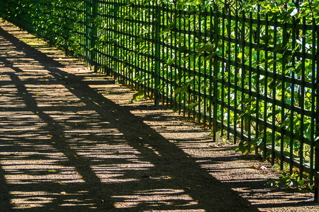Fence of the Summer garden. The old heritage of St. Petersburg.