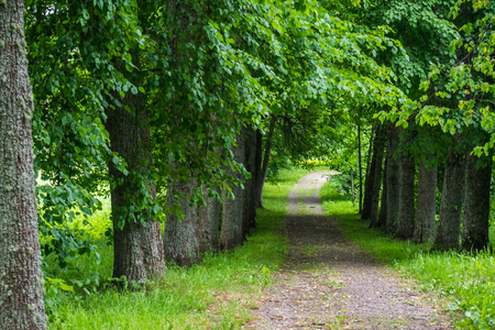 Alley of the old Russian estate in the Pskov region.