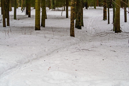 Ski track among the trees of the Park. February. Pavlovsk.