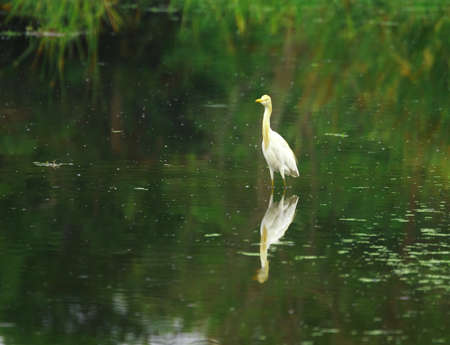 Egret Stock Photo - 4026030