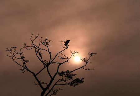 Egret at Sunset photo