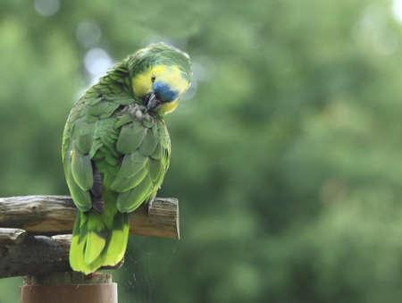 Parrot Stock Photo - 4015698