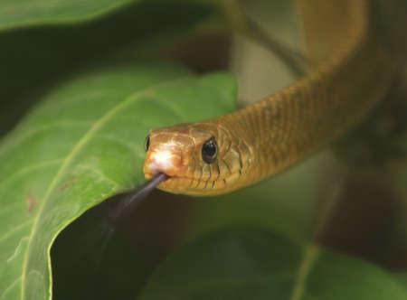 defensive posture: Serpiente