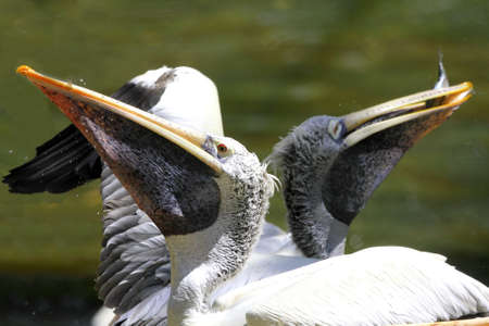 Pelican Family photo