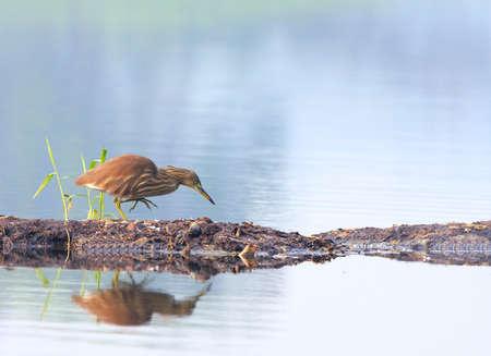 Heron Stock Photo - 4384854
