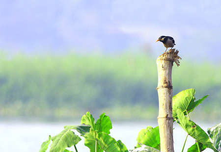 Starling photo