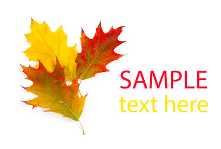 fall leaf: Colorful Fall leaves framing a message area