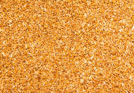 wheat grain: Processed organic wheat grains Stock Photo
