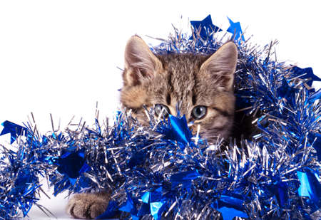 christmas pussy: Christmas decoration with cat isolated on white Stock Photo