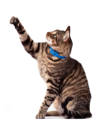 Portrait  cat isolated on white background Stock Photo