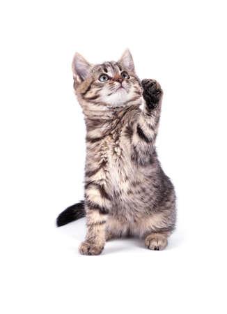 Portrait  cat isolated on white background Standard-Bild