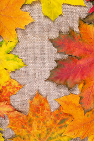 dirt background: Autumn maple leaves. Nature background