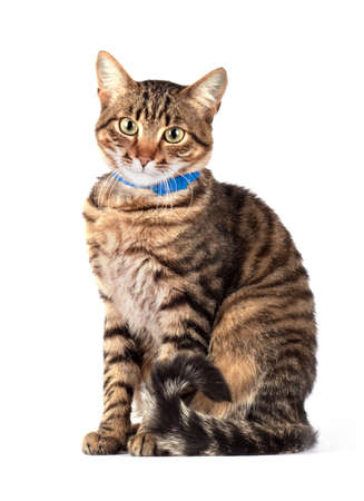 Portrait of green eyed cat