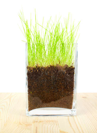 grass roots: Green grass and roots on wooden  background Stock Photo