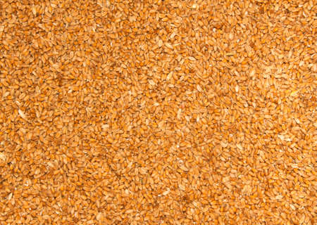 processed grains: Close up Processed organic wheat grains