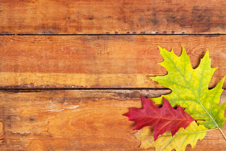 Autumn maple leaves on wood planks