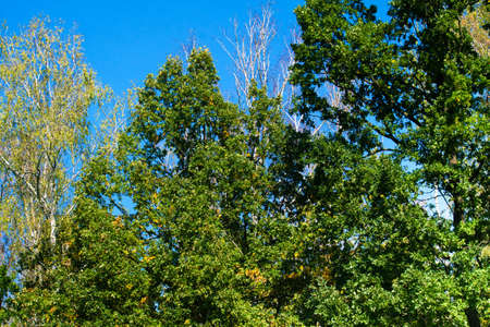 uplifting: Summer Sunny Forest Trees
