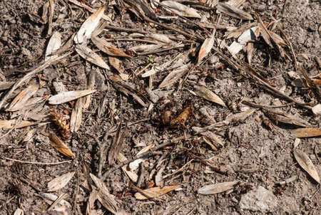 pismire: Ants eat the caterpillar close up Stock Photo