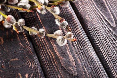 twigs: Easter willow twigs on wooden boards
