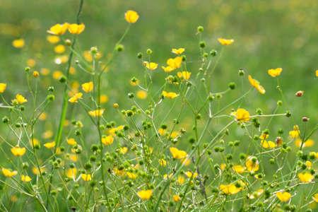 fiori di campo: Fiori di campo.