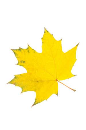 Yellow autumn leaf isolated on white background Stock Photo