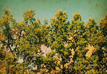 uplifting: Summer Sunny Forest Trees. Nature background. Vintage photo Stock Photo