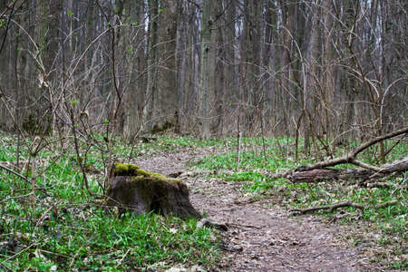magnificence: Retro Green forest. Nature background. Landscape. Spring