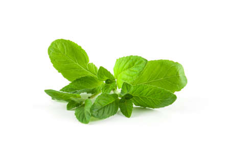 lemon balm: Fresh green melissa isolated. Food ingredients. Healthy food Stock Photo