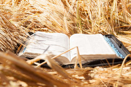 Bible in spikelets field. Holly book. Religion concept