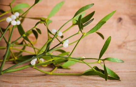 Green mistletoe close up. Nature background. Christmas plant Foto de archivo