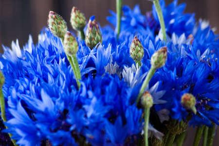 Blue flower close up on wood desk. Nature background 版權商用圖片