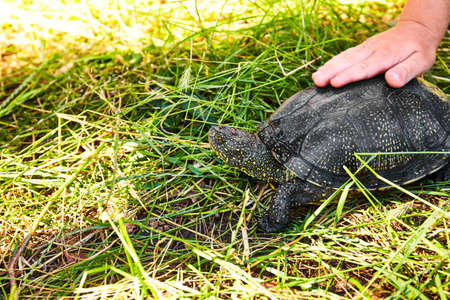 Small turtle in grass outdoor. Nature background