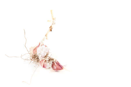 Dry garlic isolated on white background. Food ingredients