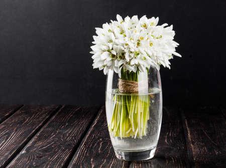 Snowdrop in vase on black background. Spring flower