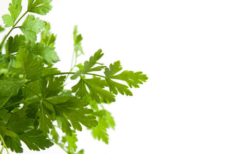 Fresh green parsley isolated on white. Food ingredients