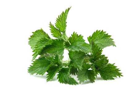 Nettle isolated on white background. Food ingredients. Health food Stok Fotoğraf