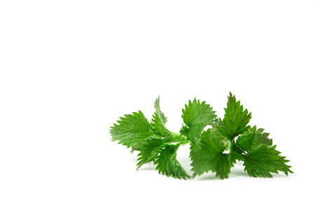 Nettle isolated on white background. Food ingredients. Health food Banco de Imagens - 122695890