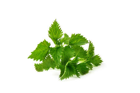 Nettle isolated on white background. Food ingredients. Health food Banco de Imagens - 122699063