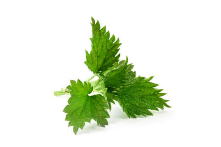 Nettle isolated on white background. Food ingredients. Health food Banco de Imagens - 122700150